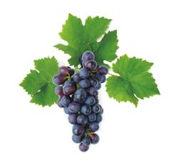 Виноград Молдова (черный), оптом, Краснодар