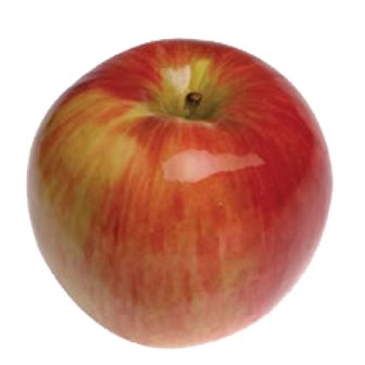 Яблоки Джонатан, Чемпион